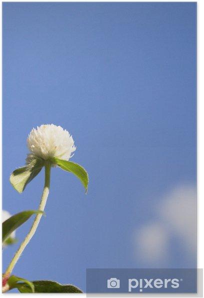 下から見上げる千日紅の花 Poster - Flowers