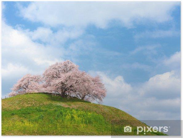 Poster 丘 の 上 の 桜 - Saisons