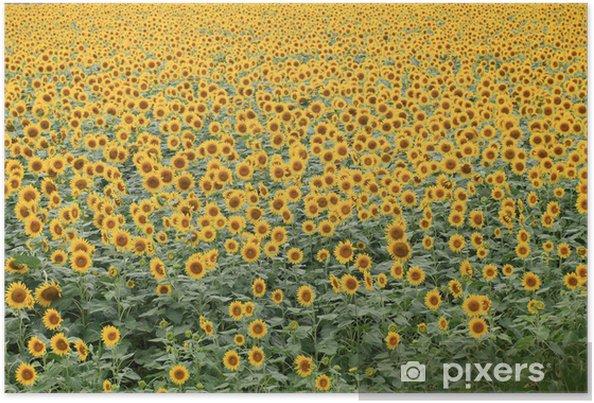 Poster 柳川 ひ ま わ り 畑 - Saisons