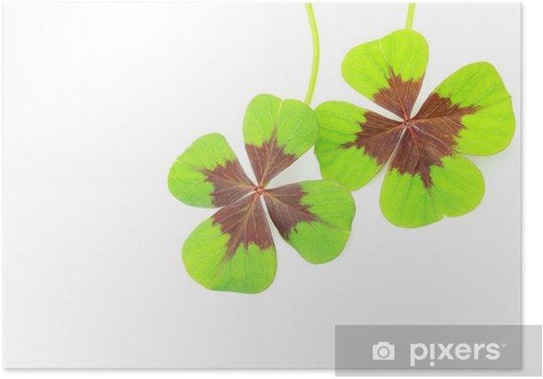 四つ葉のクローバー Poster - Wonders of Nature