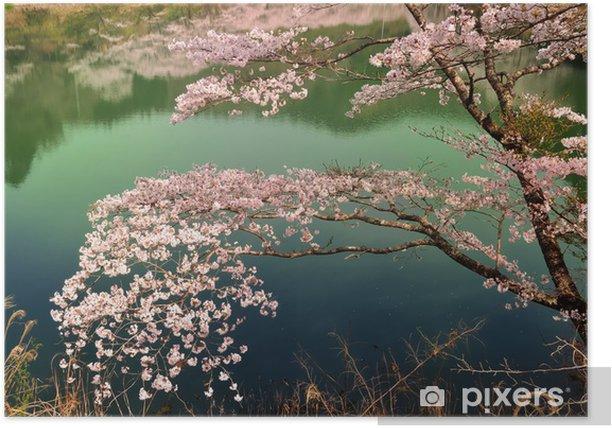 Poster 湖面 の 桜 - Saisons