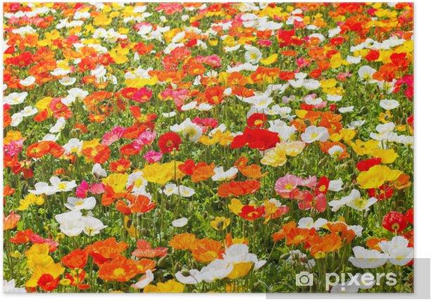 ポピー Poster - Seasons