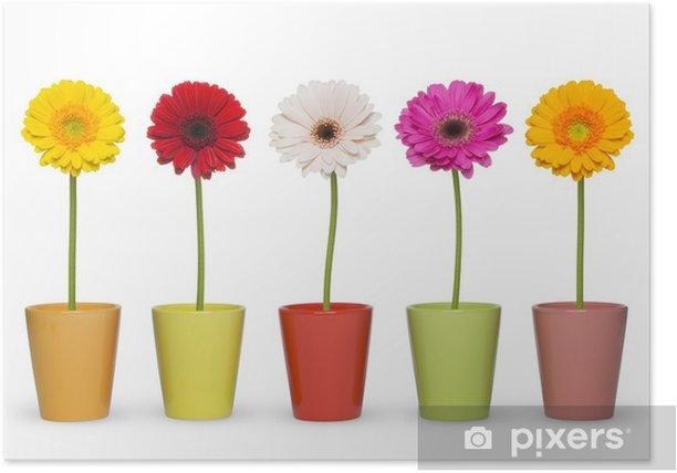 ガーベラ Poster - Flowers