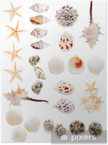 Póster 貝殻 の コ ラ ー ジ ュ - Animales marinos