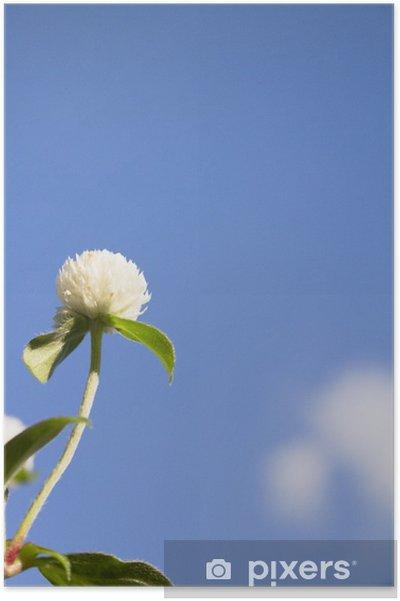 Poster 下 か ら 見上 げ る 千 日 紅 の 花 - Fleurs