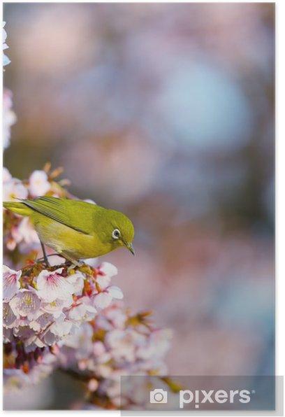 桜とメジロ Poster - Seasons