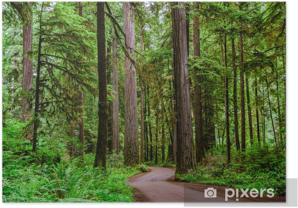 A Winding Unpaved Road Through a Forest Poster - Forests
