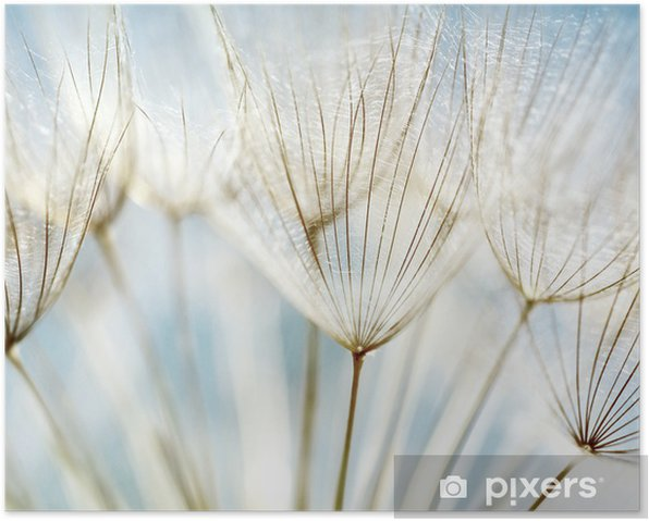 Abstract dandelion flower background Poster - Themes