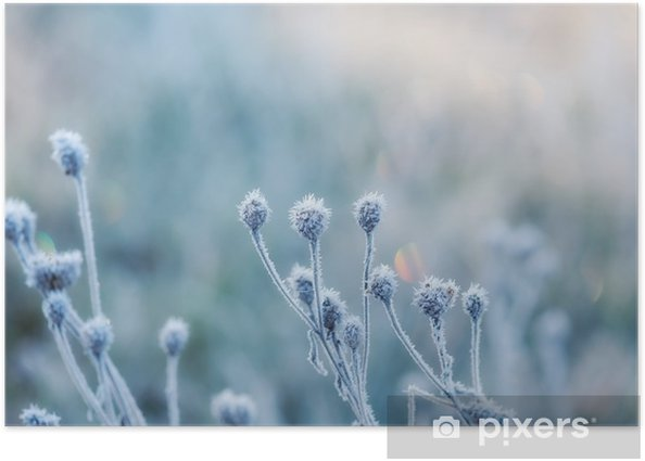 abstract natural background from frozen plant covered with hoarfrost or rime Poster - Landscapes