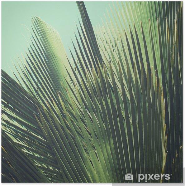 Poster Abstract vintage background tropical. Feuilles de palmier dans la lumière du soleil. - Plantes et fleurs