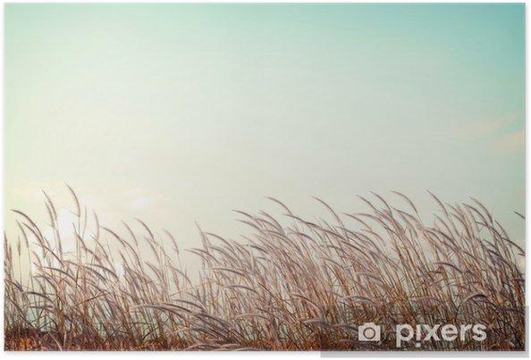 Poster Abstraite nature vintage background - douceur herbe plume blanche avec rétro espace de ciel bleu - Paysages