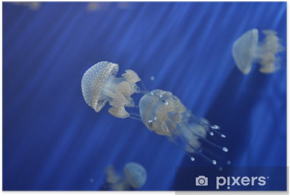 Póster Acuario - Animales marinos