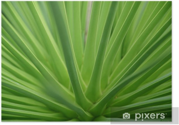Agave Poster - Flowers