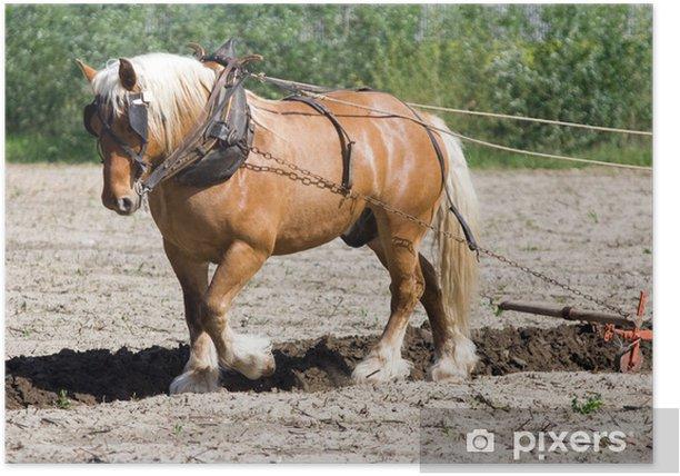 Poster Agriculture et métier : paysan et cheval de trait au labours - Agriculture