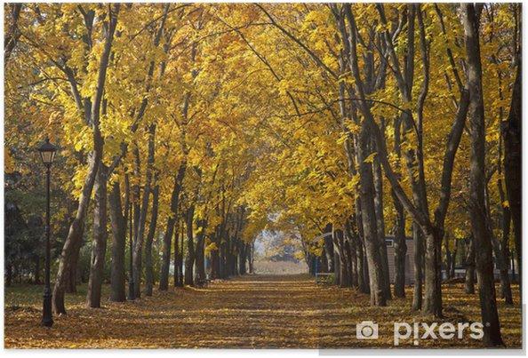 Poster Allée de jardin avec des arbres d\'automne pittoresques