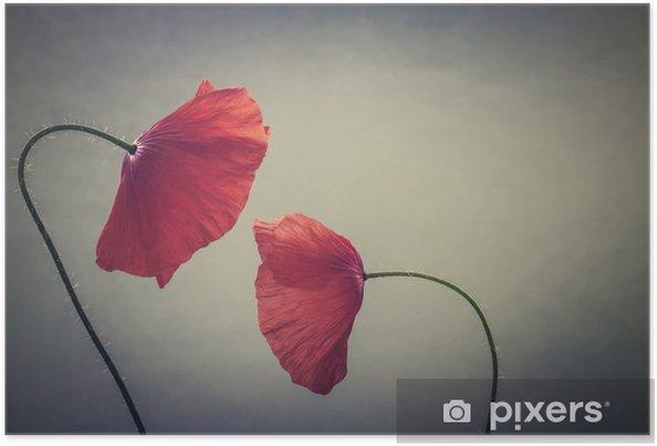 Póster Amapolas de arte - Plantas y flores