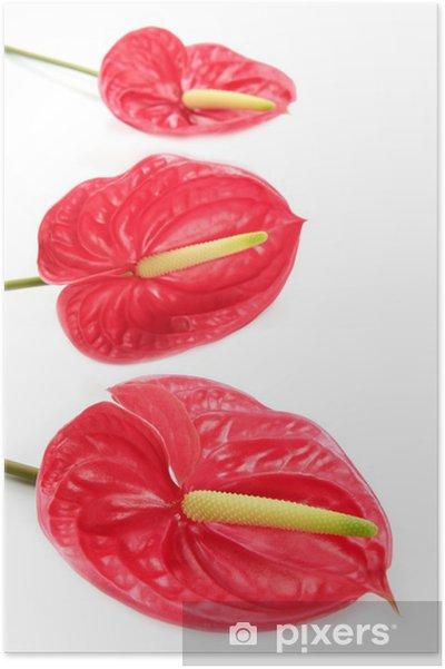 Poster Anthurium Exotique Belle Fleur Rouge Encore Pixers Nous