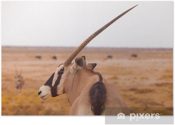 Poster Antilope oryx - Afrique