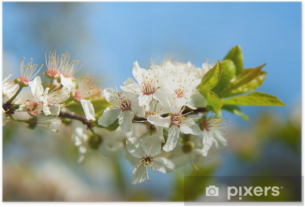 Poster Appelbloesem - Bomen