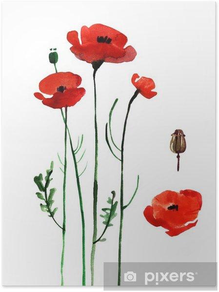 Poster Aquarel papaver, met de hand geschilderd gelijkspel - Bloemen en Planten