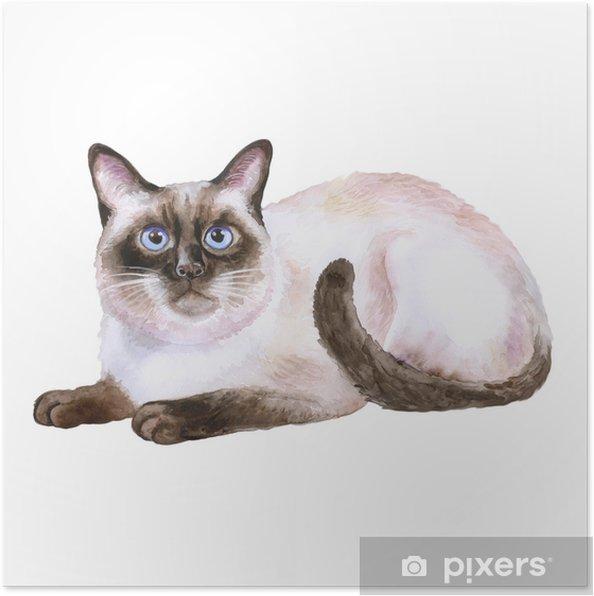 Poster Aquarelle Portrait De Chat Siamois Noir Et Blanc Cheveux Courts Isolé Sur Fond Blanc Dessiné à La Main Doux Animal Domestique Couleurs Vives