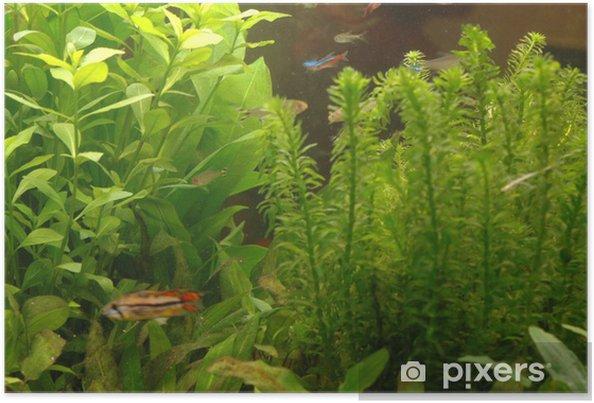 Poster Aquarium plantes et poissons - Animaux marins