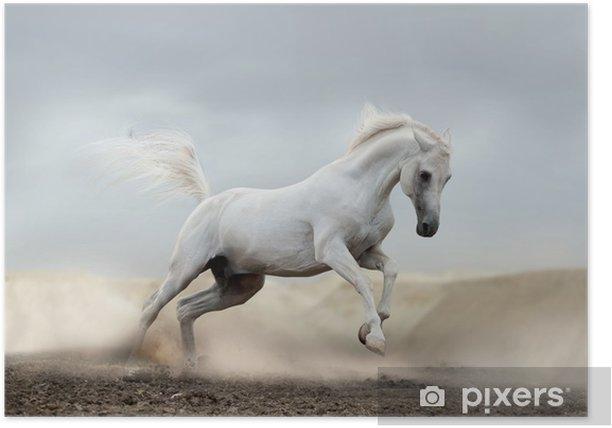arab horse Poster - Themes
