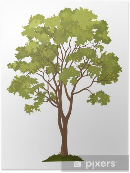Poster Arbre d'érable et l'herbe verte - Merveilles naturelles