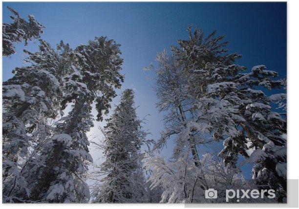 Arbre Sapin Neige Paysage Neigeux Hiver Montagne Ciel Nature Poster