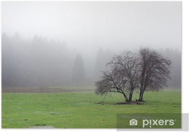 Poster Arbre solitaire avec le brouillard - Campagne