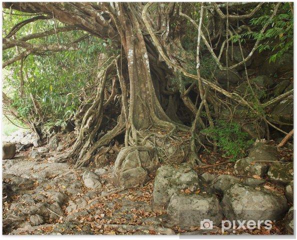 Poster Arbre tropical avec de grandes racines au-dessus du sol - Arbres
