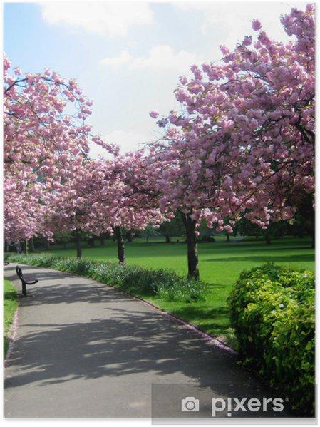 Poster Arbres à fleurs roses - Saisons