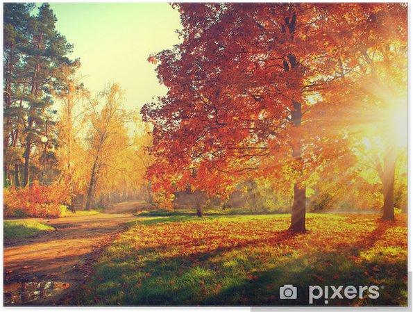 Poster Arbres baignés dans la lumière du soleil d'automne - Thèmes