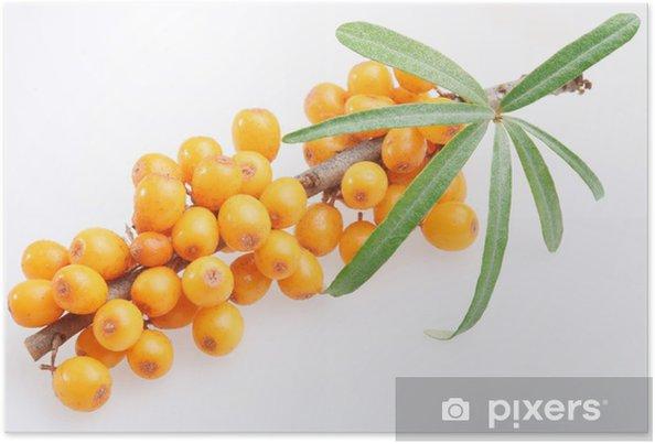 Poster Argousier sur un fond blanc. - Fruits