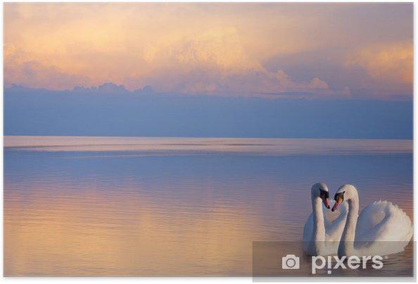 Poster Art Twee witte zwanen op een meer - Zwanen