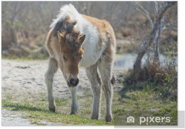 Poster Assateague bébé de cheval jeune chiot poney sauvage - Mammifères