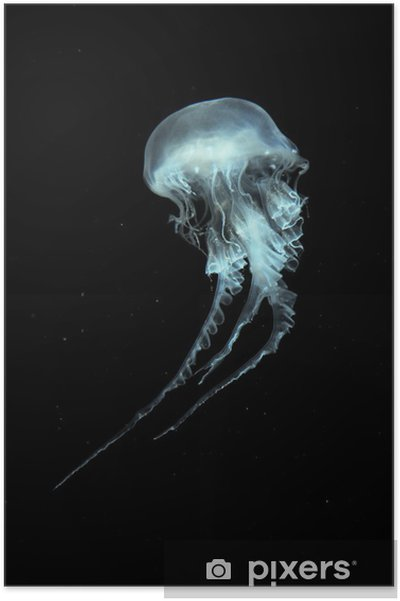 Póster Atlantic Sea ortiga medusas - Mamíferos