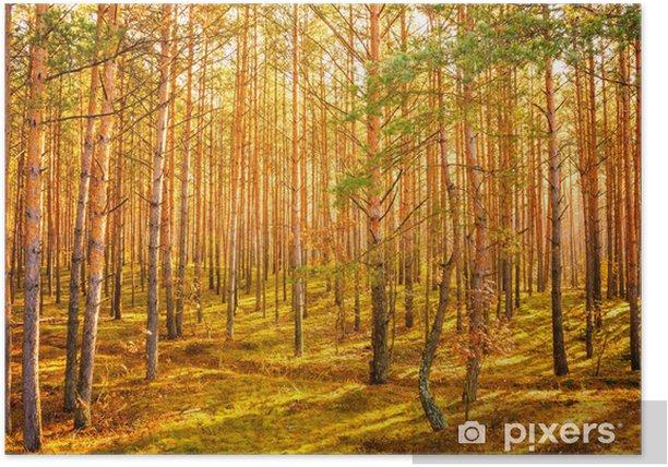 Poster Aube dans la forêt d'été vieux - Saisons