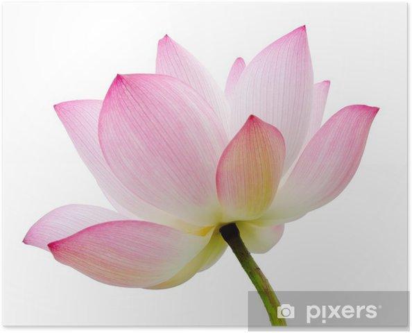 Póster Autoadhesivo Aislado de loto - iStaging