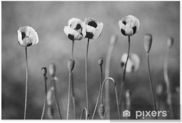 Póster Autoadhesivo Flores de amapola en blanco y negro - Plantas y flores