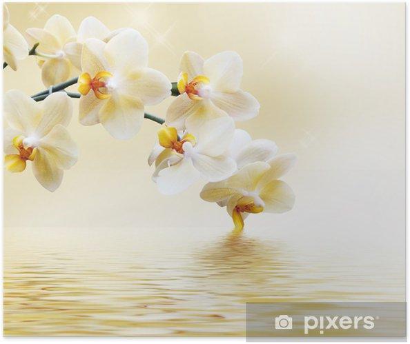 Póster Autoadhesivo Hermosa orquídea blanca -