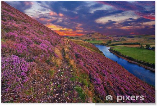 Poster autocollant Beau paysage de la nature écossais - Bruyère