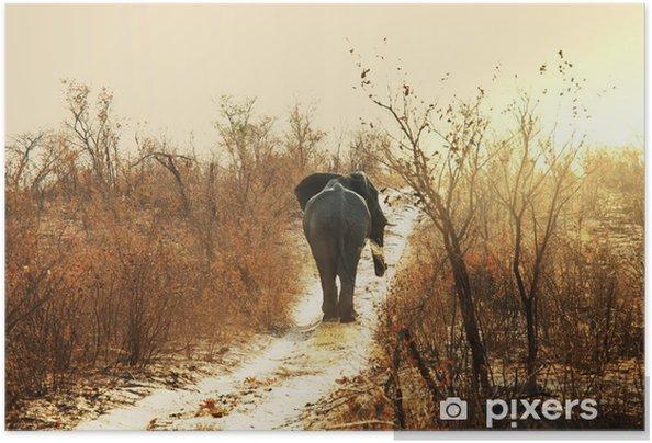 Poster autocollant Éléphant - Thèmes