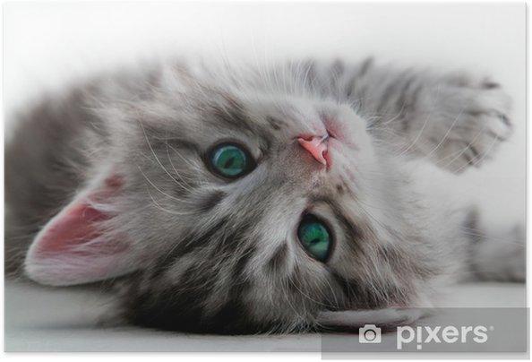 Poster autocollant Reste Kitten - isolé - Thèmes