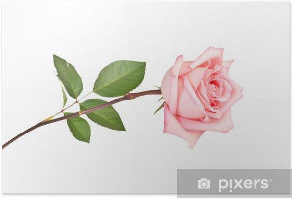 Poster autocollant Rose - Thèmes