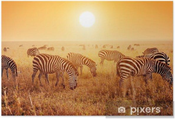 Poster autocollant Troupeau de zèbres sur la savane africaine au coucher du soleil. - Thèmes
