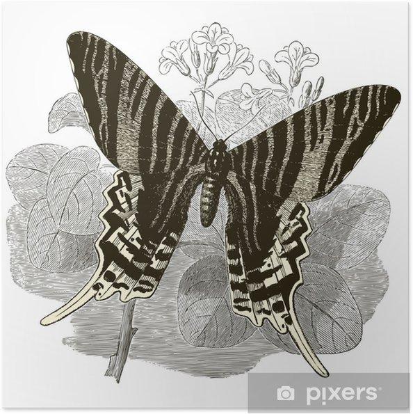 Poster autocollant Vintage papillon - Autres Autres