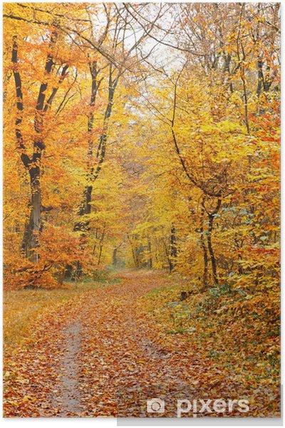 Poster Autumn forest - Saisons