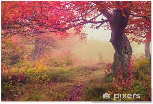 Poster Autumn forest - Thèmes