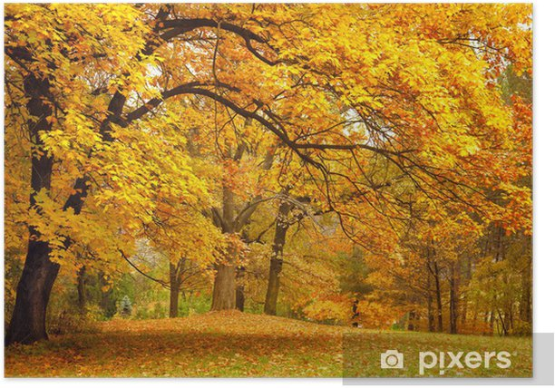 Autumn / Gold Trees in a park Poster - iStaging